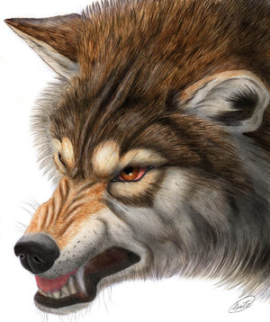 Anger_wolf_by_derSheltie